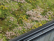 Products for green roofs